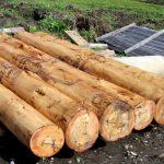 Juvenile Logs
