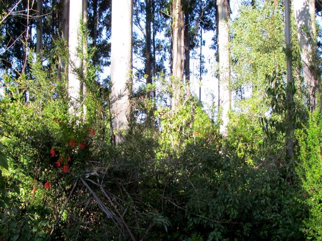 biodiversity-ml