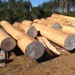 Pruned logs